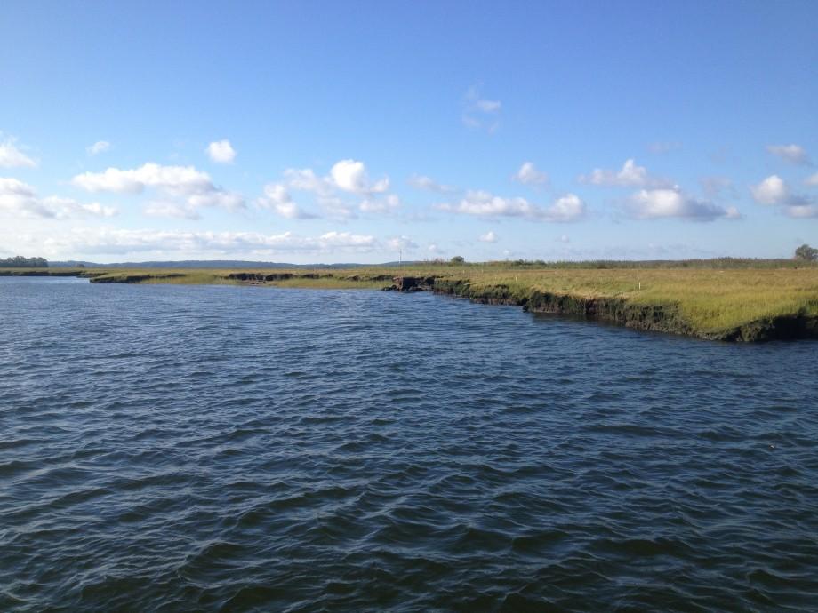 marsh bank